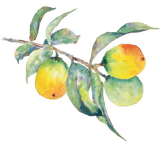 ZPF Lemon Branch 01 Gift from the Kitchen #3   Preserved Lemons