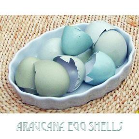 Ph araucana shells c egbert Mayo & Egg Salad from Local Hens