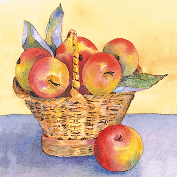 apple basket 02 c egbert Harvest Apples for Sauce and Jelly