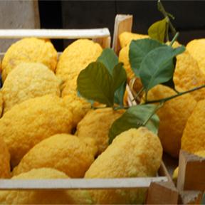 bl citron 013 Citron   Persian Apple