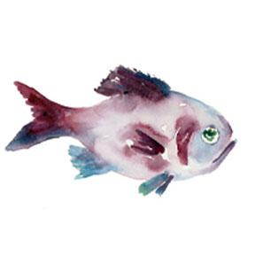 blue fish c egbert  Salmon Citrus Salad   Dinner on the Road