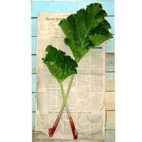 f rhubarb herald Rhubarb Heralds Spring   Roasted Rhubarb