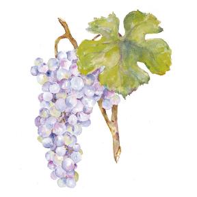 grapes 02 Fox Grape Jelly Roll