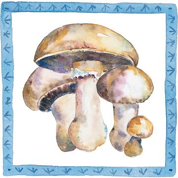 mushroom 02 c egbert Mushroom Soup