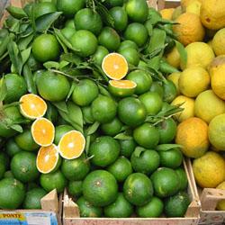 oranges ortigia1 oranges ortigia