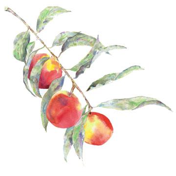peach branch c egbert Creamy Peach Pie