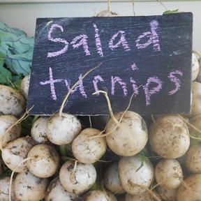 turnips c egbert Kohlrabi Fritters from a Vermont CSA